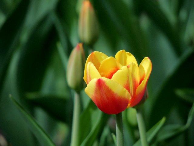 Фотографии цветов и деревьев 1ab147c2dd9c