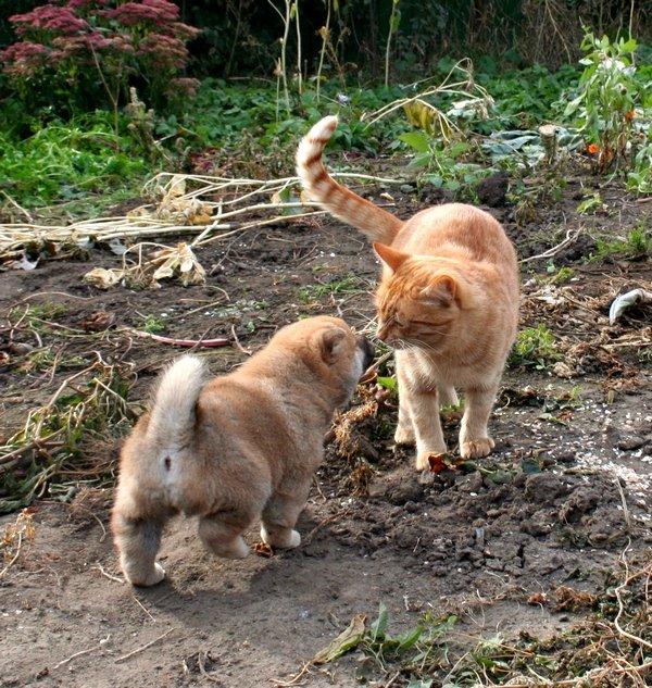 Хочу шибу, но дома кот… рисковано? - Страница 2 7b9af283425b