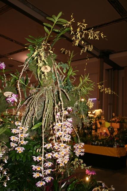 Выставка орхидей в Дрездене (март 2012г.) - Страница 2 F13bb7cd8e72