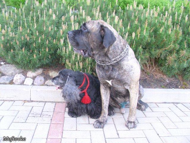 Собаки Татьяны Моисеенковой, кот Мензурка - Страница 4 3b267c93cf39