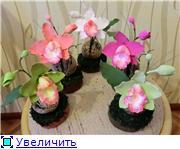 Цветы ручной работы из полимерной глины E765a35be41bt