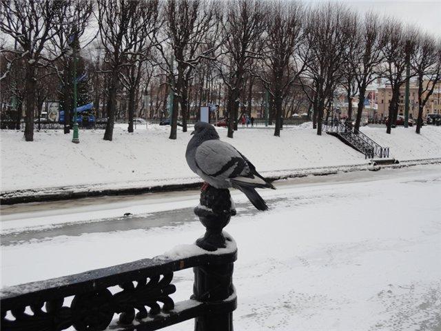 Зимняя сказка на наших фотографиях - Страница 4 C19b6a611af0