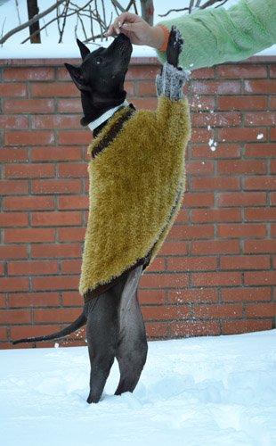 Magic Charm - ошейники, поводки, ринговки, вязаная одежда и другие аксессуары для собак 423d700f2a66