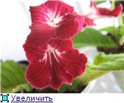 Семена глоксиний и стрептокарпусов почтой - Страница 8 958266980972t