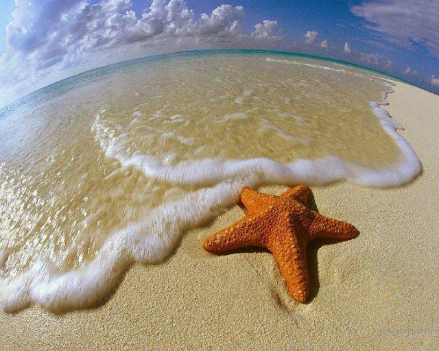 Морская звезда 8ccbd23c5405