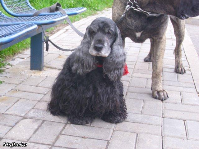 Собаки Татьяны Моисеенковой, кот Мензурка - Страница 4 3831044290ae