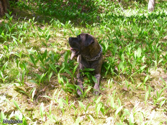 Собаки Татьяны Моисеенковой, кот Мензурка - Страница 4 F059b9936294
