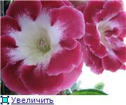 Семена глоксиний и стрептокарпусов почтой - Страница 7 C134f3fe0622t