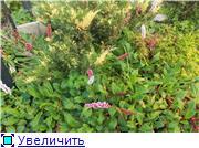 Cад Людмилы Ивановой из черкасс A9ca5d0acb0at
