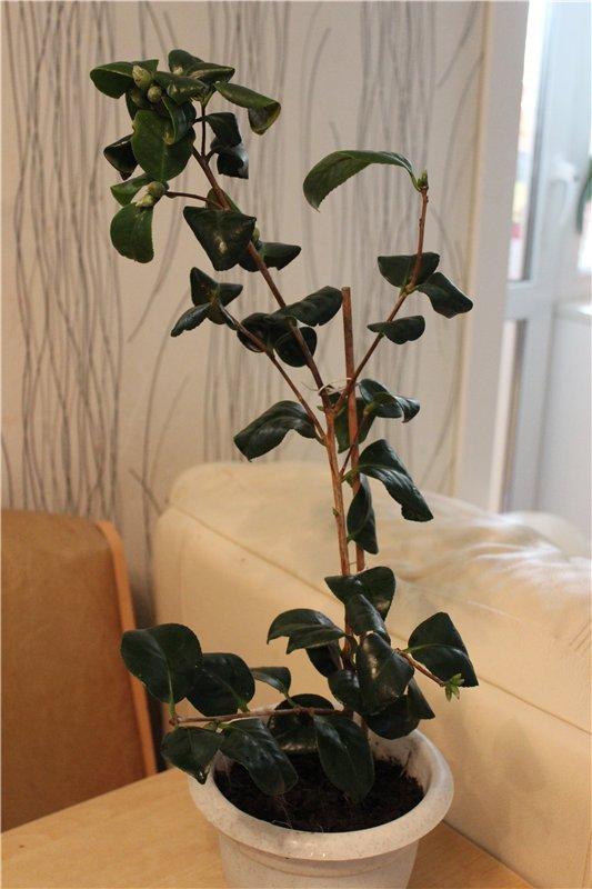 продаю цветы 23a62bda9764