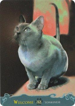 Кошачий оракул 2ba5e1b7ceb3