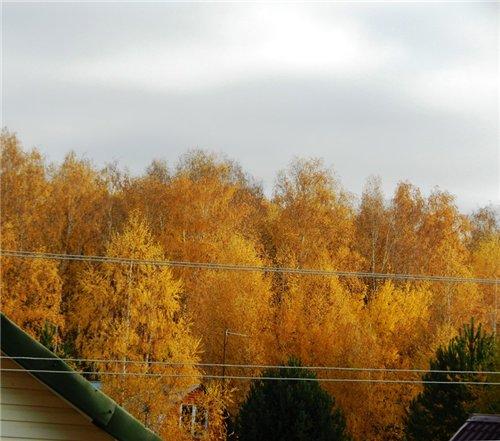 Осень, осень ... как ты хороша...( наше фотонастроение) - Страница 6 11c6bbcb2870