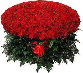 Поздравляем с Днем Рождения Анастасию (Byssinovka) 23917f779fa7t