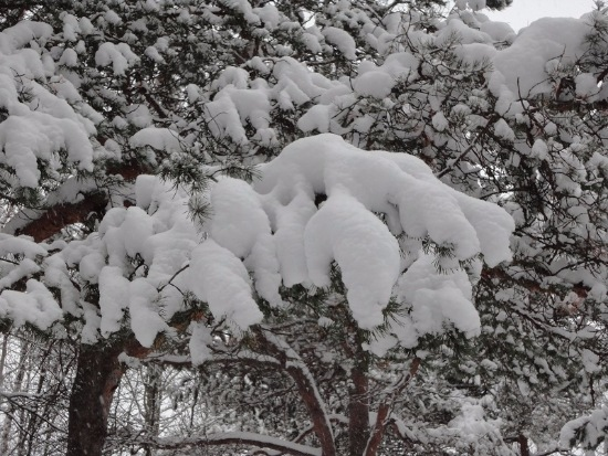 Зимняя сказка на наших фотографиях - Страница 14 43384c2e85e7