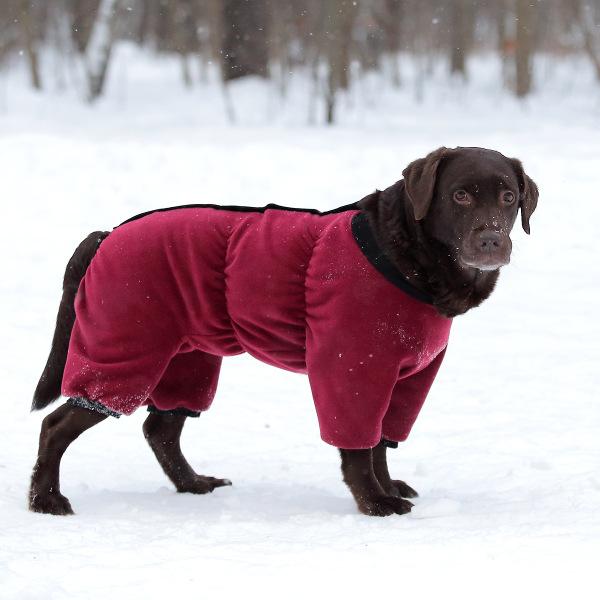 Интернет-магазин Red Dog- только качественные товары для собак! - Страница 7 5e3402e5ed41