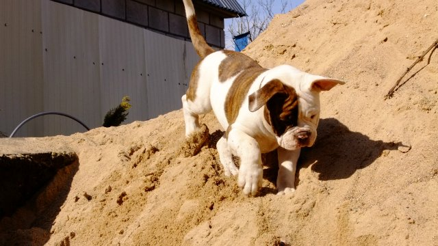 Собаки питомника Carpen Diaz - Страница 2 4c748aae8eb4