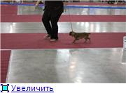 """""""ЕВРАЗИЯ-2012"""" 8bc8d2e04c58t"""