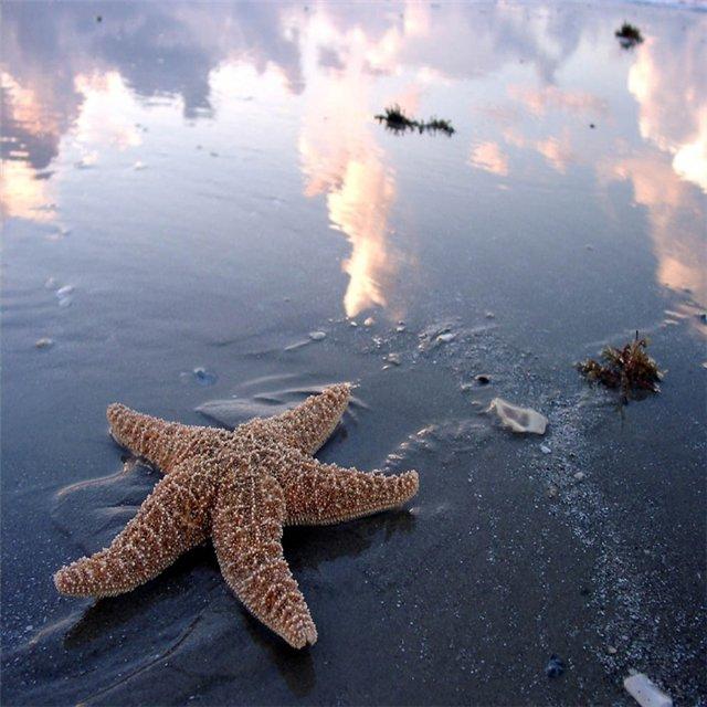 Морская звезда 89e5677d466d