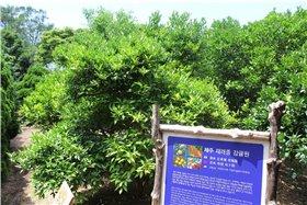 Южная Корея. Остров Чеджу–Сеул. 5c85d55ba7b2t