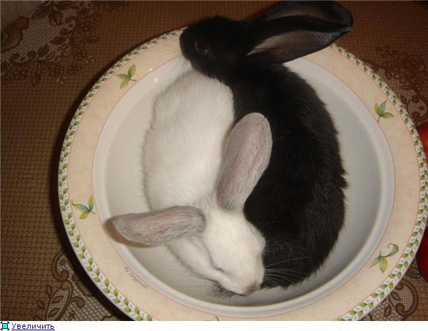 Кролики, декоративные и не очень) - Страница 3 71c0862a055ct