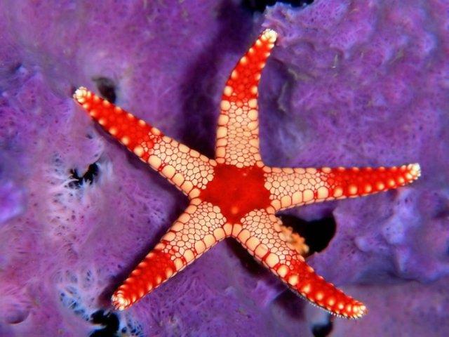 Морская звезда B1898a79b096