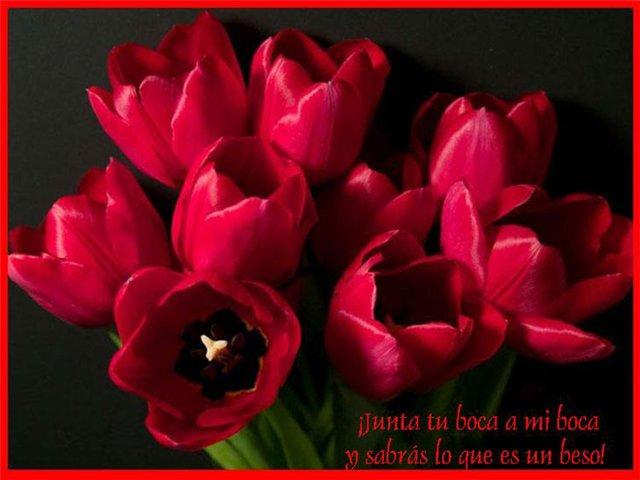 Te hablo con un tulipan 6491819c05d0