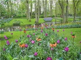 Рай тюльпанов или Кёкнхов - 2012 Cf9a0f0679aet