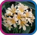 продам семена экзотических растений - Страница 3 3eb1e7a0110e