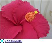 Цветы ручной работы из полимерной глины 680ac64112aat