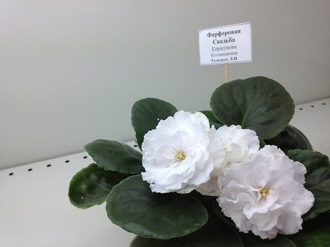 Выставка цветов - Страница 2 1c9a471c1ea1