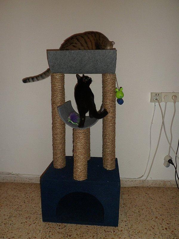 Коты, кошки, котята и все что с ними связано - Страница 64 A0bdd47e6d75