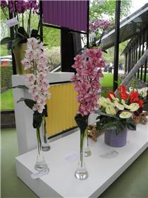 Рай тюльпанов или Кёкнхов - 2012 47d1dcf6f8a1t