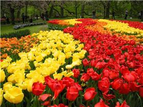 Рай тюльпанов или Кёкнхов - 2012 A5a2a240ef6ct