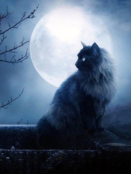 Коты-Воители. Мгла. Сияние темноты 8c17b719063d