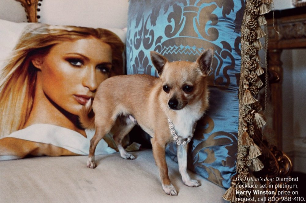 Пэрис Хилтон/Paris Hilton - Страница 5 6d4ab1715577