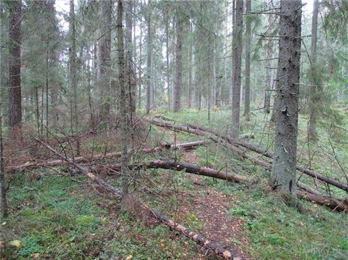 В РФ вводят уголовную ответственность за сбор дров в лесу 50684a65242f