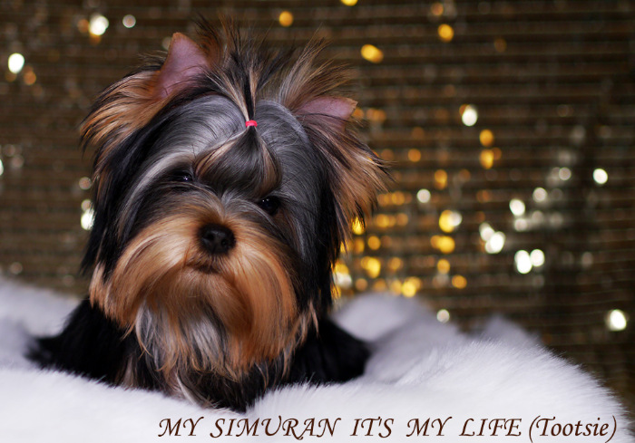 My Simuran It's My Life (Тутси)  124f320f3a26