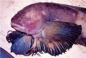 Колпинский форум рыбака - Портал 1ecd0d121eae