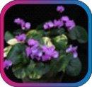 продам семена экзотических растений - Страница 3 Af6c1e2d6108