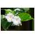 КУТРОВЫЕ (табернемонтана, адениум. дипладения .плюмерия)