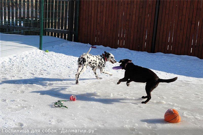 Семейная гостиница для собак в Дедовске (передержка) B7c0fa82ebe0
