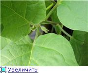 Овощи - Страница 5 E2d2d29f0609t