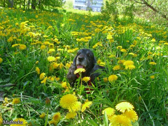 Собаки Татьяны Моисеенковой, кот Мензурка - Страница 4 3e3bbebee809