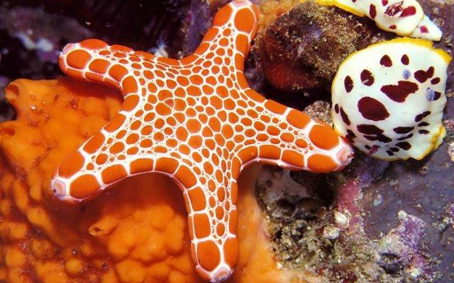Морская звезда D5903cdc6910