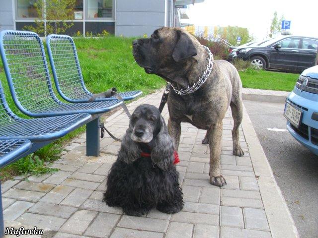 Собаки Татьяны Моисеенковой, кот Мензурка - Страница 4 C64151b61f50