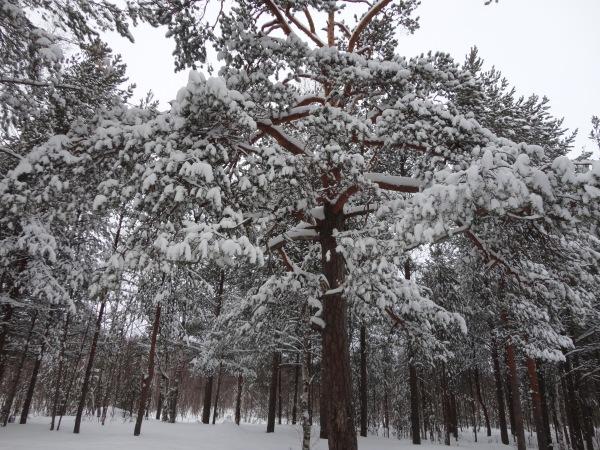 Зимняя сказка на наших фотографиях - Страница 14 7c82f30abb72