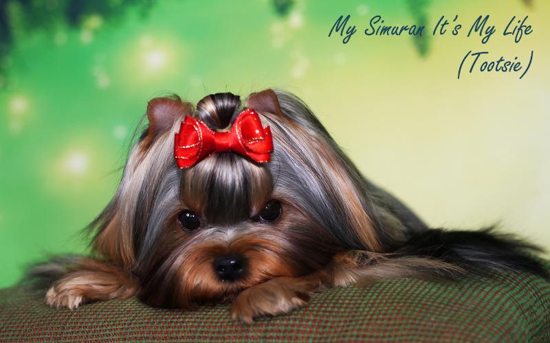 My Simuran It's My Life (Тутси)  B0a3ea0908b8