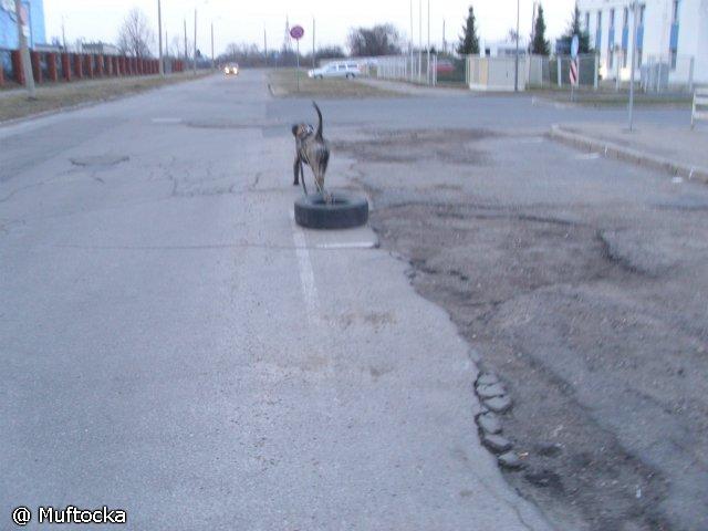 Собаки Татьяны Моисеенковой, кот Мензурка - Страница 3 173fb9e9f021