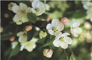 Цветы (flowers) E2ebf008977et