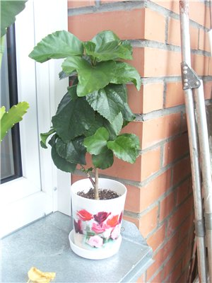 Продам, общие объявления по продаже растений 55d0356176d4